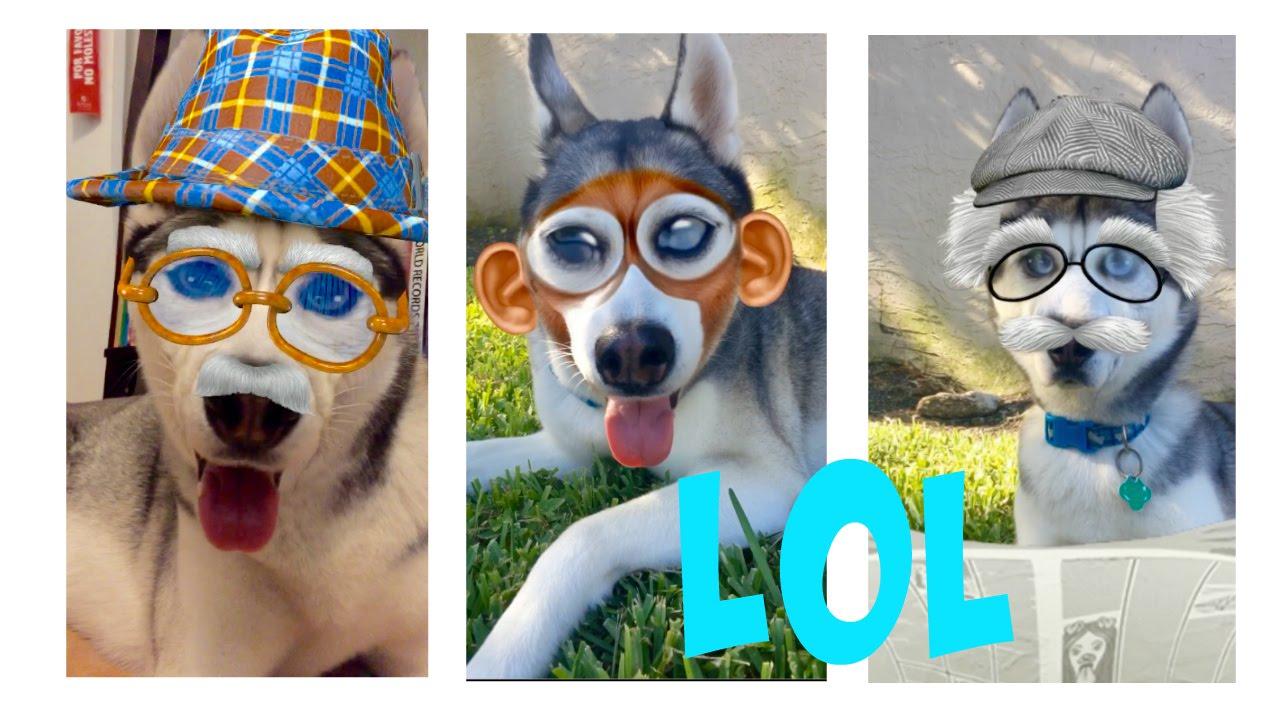 Gohan The Husky vs Snapchat Filters!