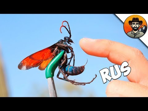 Укус насекомого опухоль и покраснение что делать