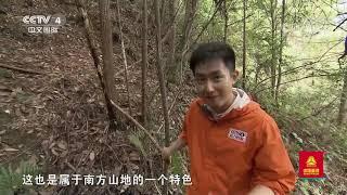 [远方的家]行走青山绿水间 浙江仙居饭蒸岩| CCTV中文国际