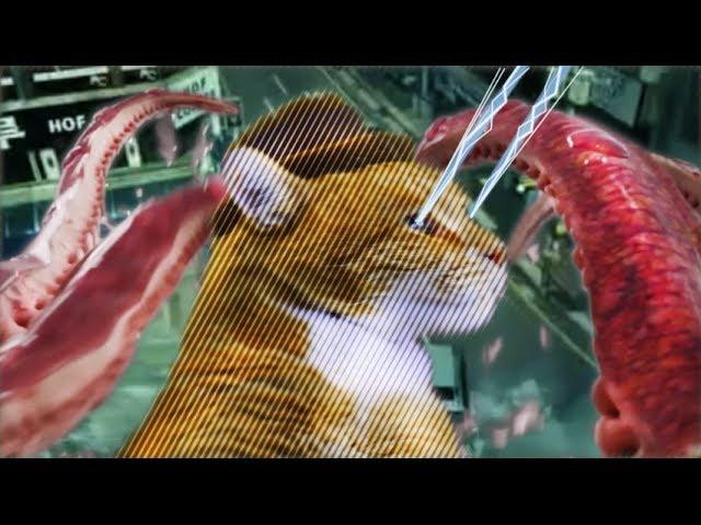 Кот-виртуоз