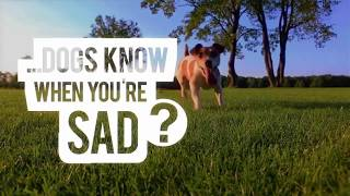 """How Do Dogs Know When You're Sad?"" - Season 1 Episode 3 ""How Do Animals Do That?"" On Animal Planet"