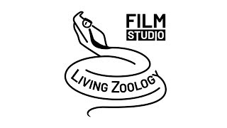 Living Zoology film studio by Matej Dolinay and Zuzana Dolinay