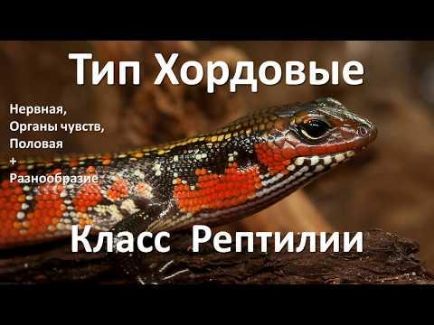 13.2 Рептилии часть II  (7 класс) - биология, подготовка к ЕГЭ и ОГЭ 2019