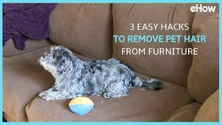 3 Easy Hacks to Remove Pet Hair From Furniture | DIY IRL