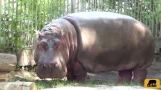 Поездка в Киевский зоопарк