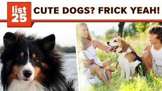 Top 25 Cutest Dog Breeds You'll Fall In Love With