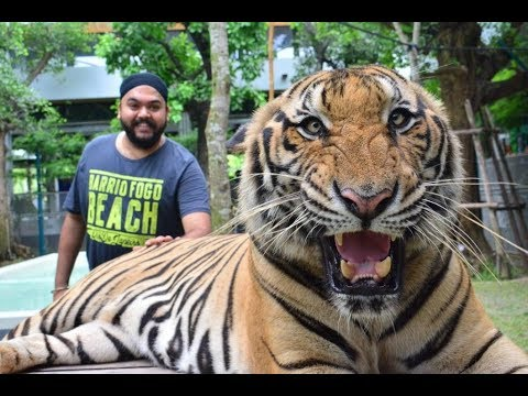 Tiger Park Pattaya | Thailand Series | Whats Happen's in the end will give you goosebumps...!!!