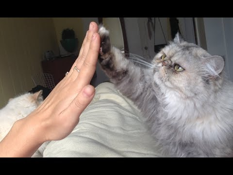 LAUGH at these AMAZING ANIMAL TRICKS! Funny CAT, DOG and ANIMAL TRICKS