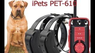Электронный ошейник для дрессировки собак iPets PET610