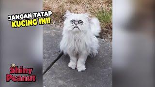Download Video Serem Tapi Gemes? Inilah Kucing Paling Viral Saat Ini MP3 3GP MP4