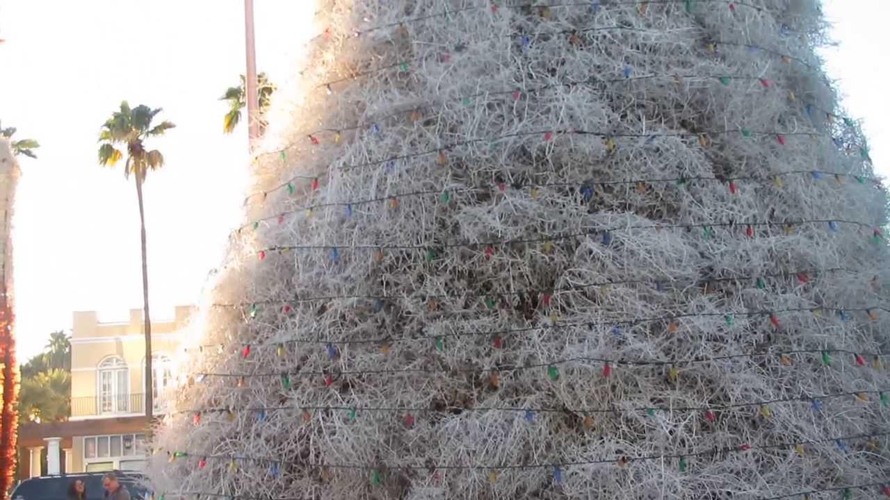 Chandler, AZ Tumbleweed Tree