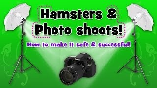 How to: Photo shoot with your hamster