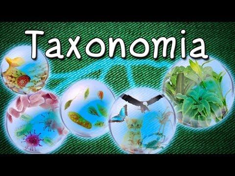Taxonomia - Sistemática - Classificação dos Seres Vivos - Carlos Lineu - Aula Grátis de Biologia