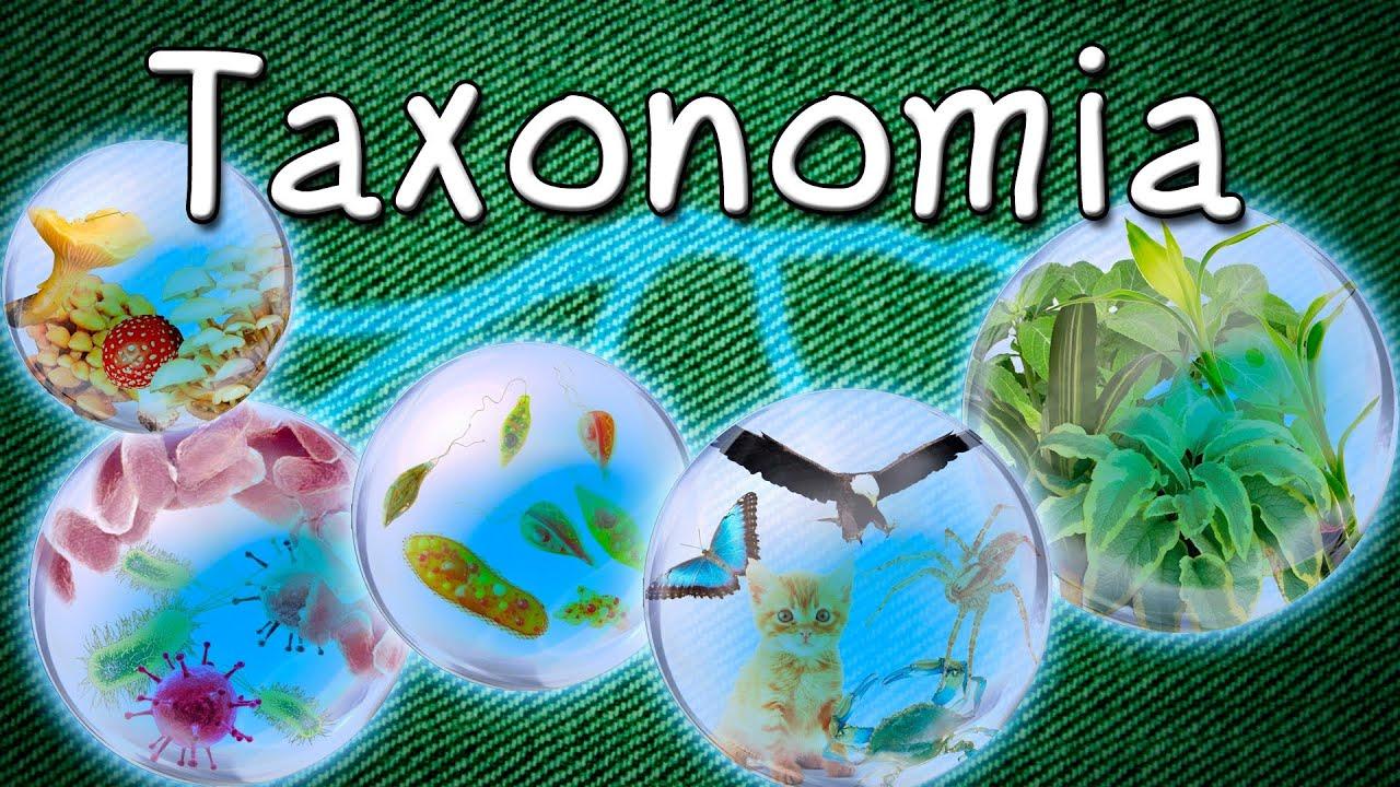 biologia para dummies pdf gratis
