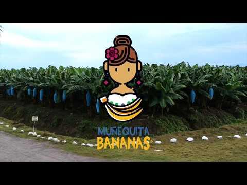 Proceso de producción y empaque del Banano (platano)