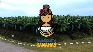 Proceso de producción y empaque del Banano (platano) thumbnail