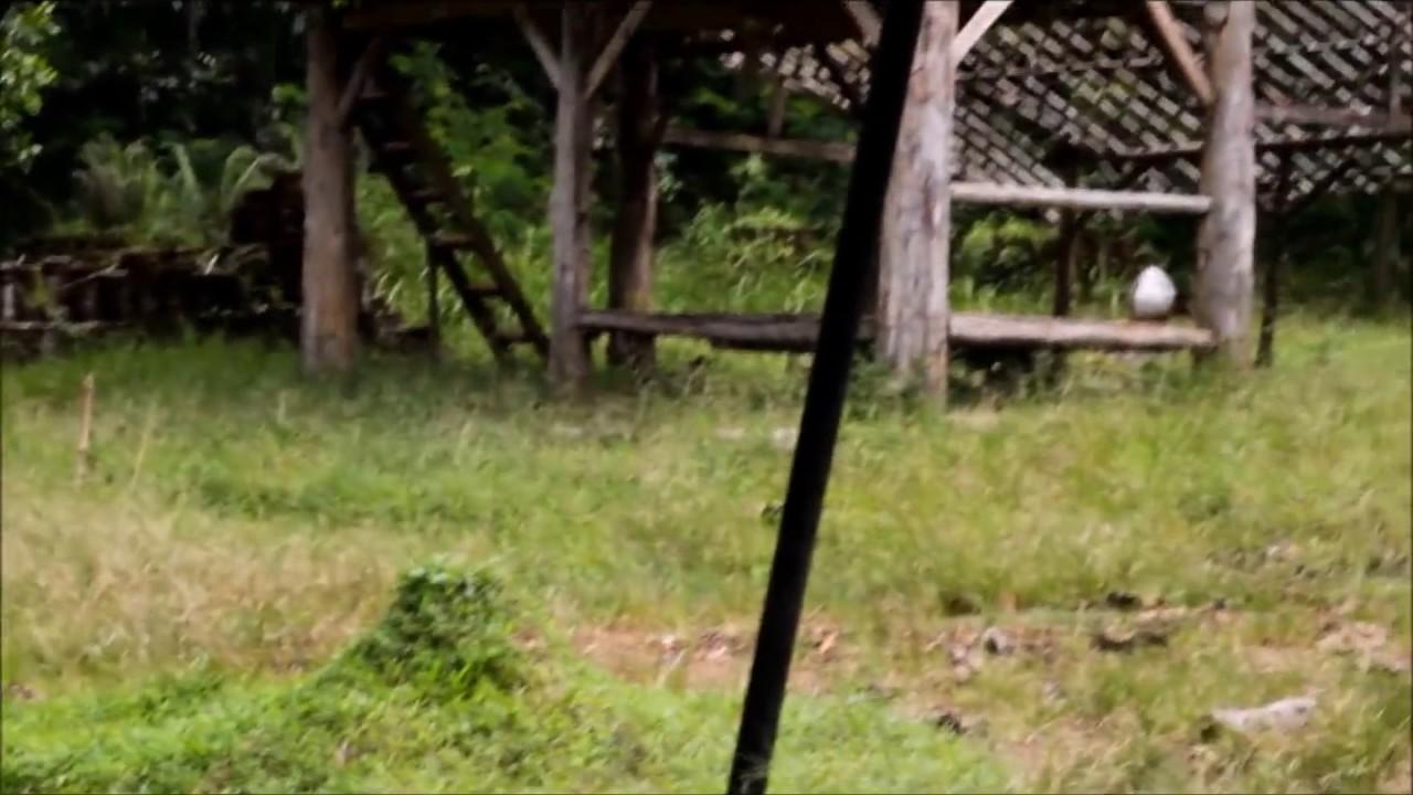 Kunjungan Wisata Bukit Alam Hejo Youtube