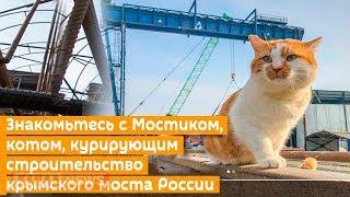 Главной звездой Крымского моста стал кот Мостик