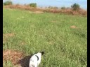How to work English Pointer