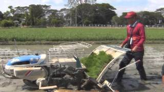 How to plant rice Using Mechanical Rice Transplanter (Walk Behind)