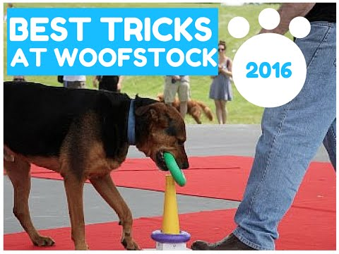Best Dog Tricks at Woofstock 2016 Day 1 - Must See!!