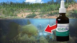 Реакция рыбы на ЗЕЛЁНКУ Подводная съемка