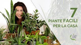 7 piante facili per la casa - Lista per pollici neri