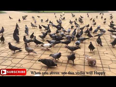 pigeon-feed,-holiday,-life-with-the-word