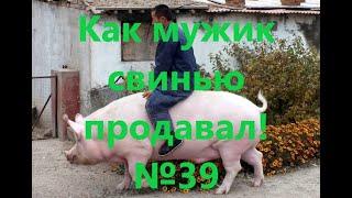 Как мужик свинью продавал 39 Анекдот от Веталя АНЕКДОТЫ 18 ПРИКОЛЫ