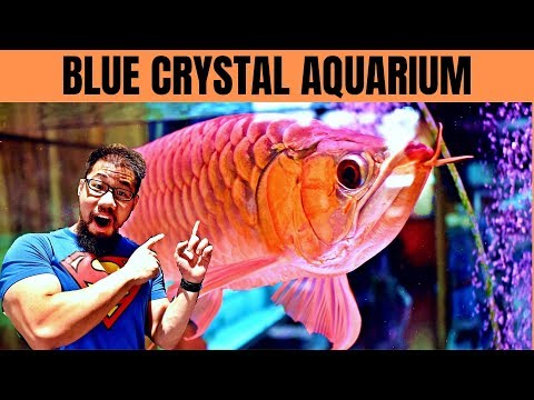 ASIAN AROWANA STORE TOUR | 1,200 Gallon Monster Tank | Blue Crystal Aquarium