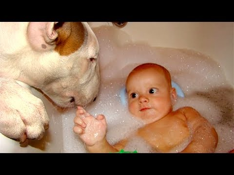 Bull Terrier and Baby Compilation