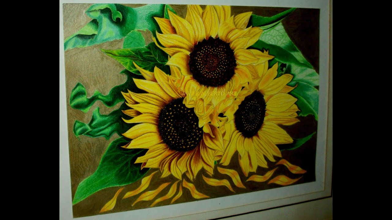 Drawing sunflowers  Dibujando Girasoles  YouTube