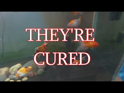 How To Cure Swim Bladder Disease