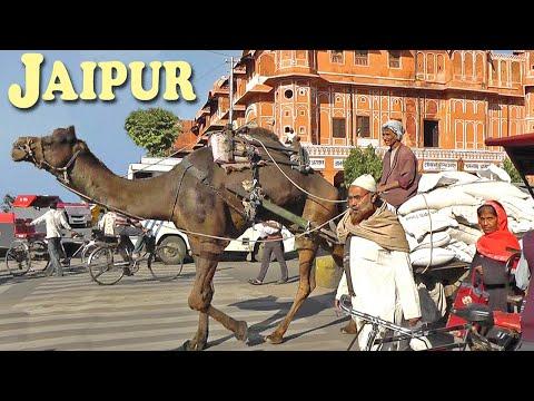 Indie - Jaipur - Fort Amber i Świątynia Małp