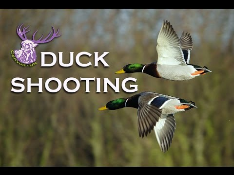 OPEN SEASON DUCK SHOOTING!