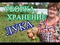 Советы по Уборке и Хранению Лука. (30.07.16)
