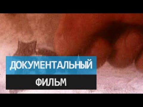 За секунду до катастрофы - взрывы на Бали - YouTube