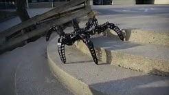 Scorpion vs Spider Robots | Hexapod Robots | Quadrapod Robots