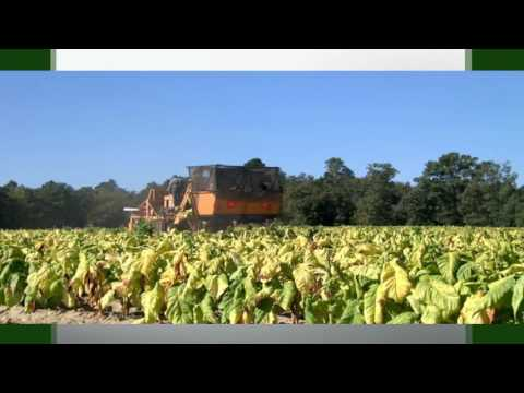 Commodity Close-up: The History of Tobacco in Virginia