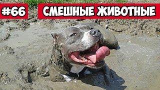 Смешные животные - собака в грязи | Bazuzu Video ТОП подборка ноябрь 2017