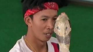 Змеи в Таиланде (snakes in Thailand ,  ) - Паттайя ( шоу со змеями )