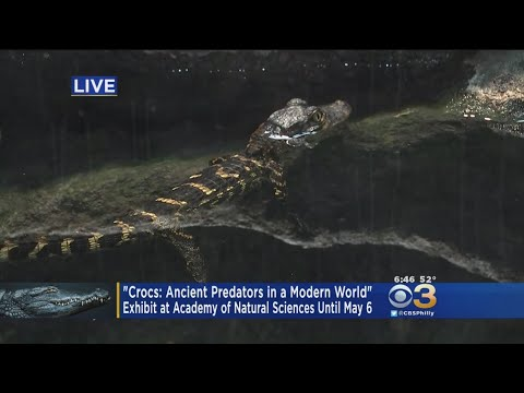 'Crocs' Exhibit Opens Up At Academy Of Natural Sciences