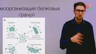 Биологические макромолекулы. Эволюция и самоорганизация белков