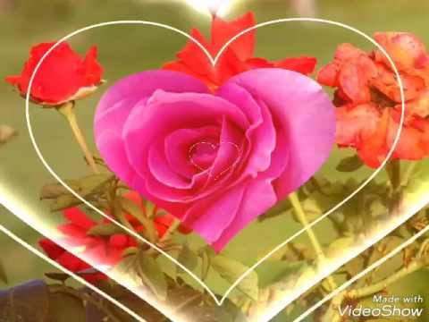 Good Morning Rose Whatsapp Video Message Youtube