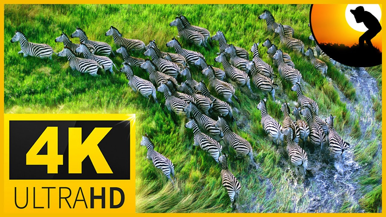 4K VIDEO ULTRA HD AFRICAN WILDLIFE - MASAI MARA The Great Wildebeest Migration