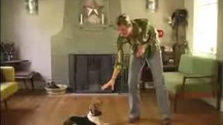 How To Train A Beagle : How To Teach Your Beagle To Lay Down Using These Dog Obedience Training Tips