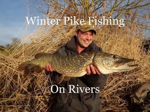 Winter Pike Fishing On Rivers