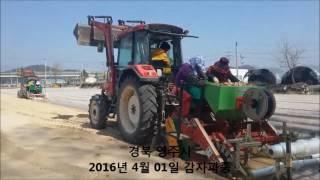 강농 감자 파종기 2016년 4월 KANG NONG-Potato planters sowing video