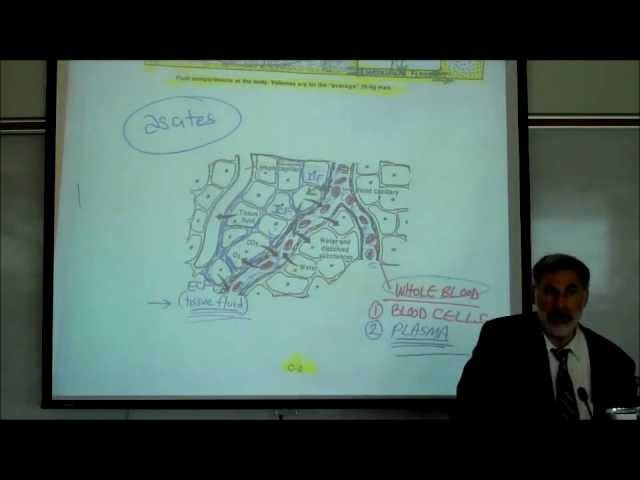 PHYSIOLOGY; FLUID COMPARTMENTS IN THE BODY by Professor Fink