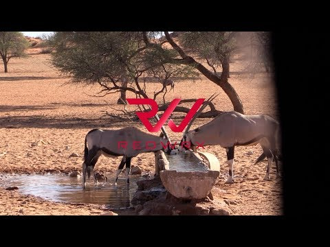 Bow Hunting Africa – 55 BOW KILLS IN 5 MINUTES